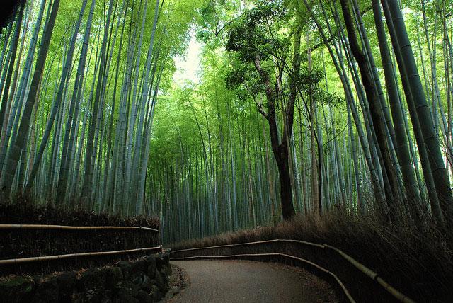 Arashiyama_bambou